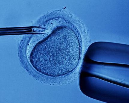 Artigos cientificos sobre celulas tronco